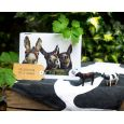 Pack of 6 Donkey Greeting Cards