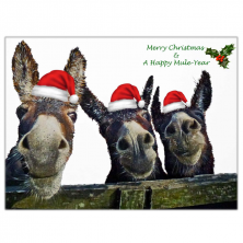 Happy Christmas and A Happy Mule Year Donkey Greeting Card Pack of 6