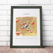 Waxwing Signed A4 Print