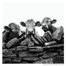 The Good The Bad and The Ugly Framed Jersey Cow Print