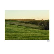 Framed Photograph of Tractors Taking in Silage