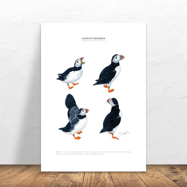 Puffins Signed A4 Print