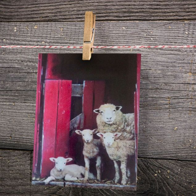 Peek A EWE Greeting Card